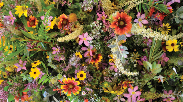 Florida Wildflowers and Flowers for Weddings and Events - Eco Florist - Sarasota